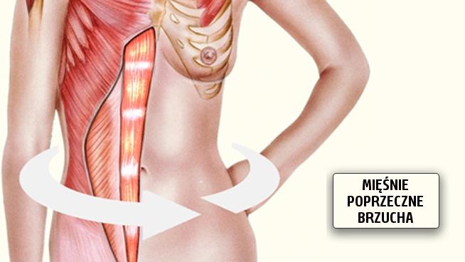 miesnie-poprzeczne-brzucha