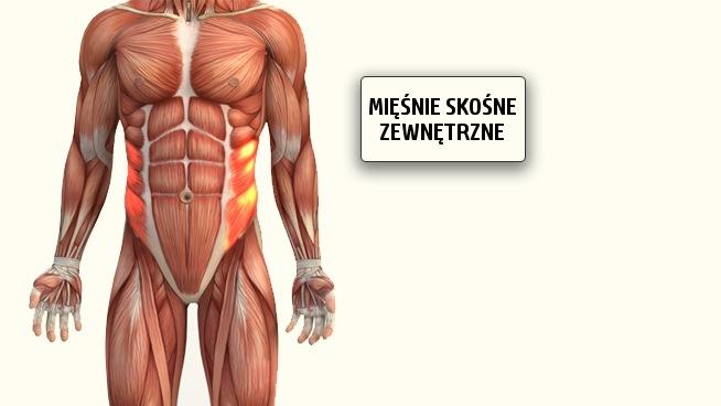 miesnie-skosne-zewnetrzne-brzucha
